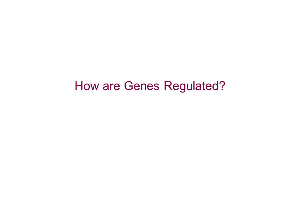 How are Genes Regulated?