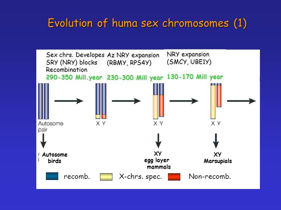 Evolution of huma sex chromosomes (1) Sex chrs.