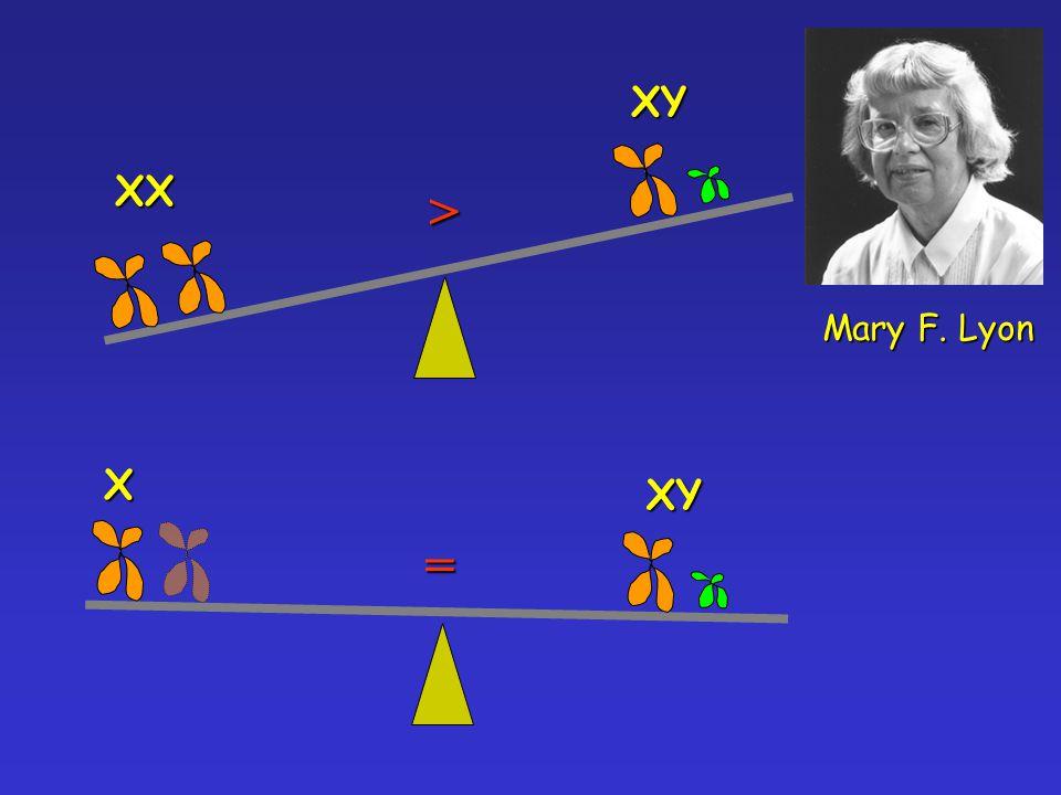 XX XY > XYX= Mary F. Lyon