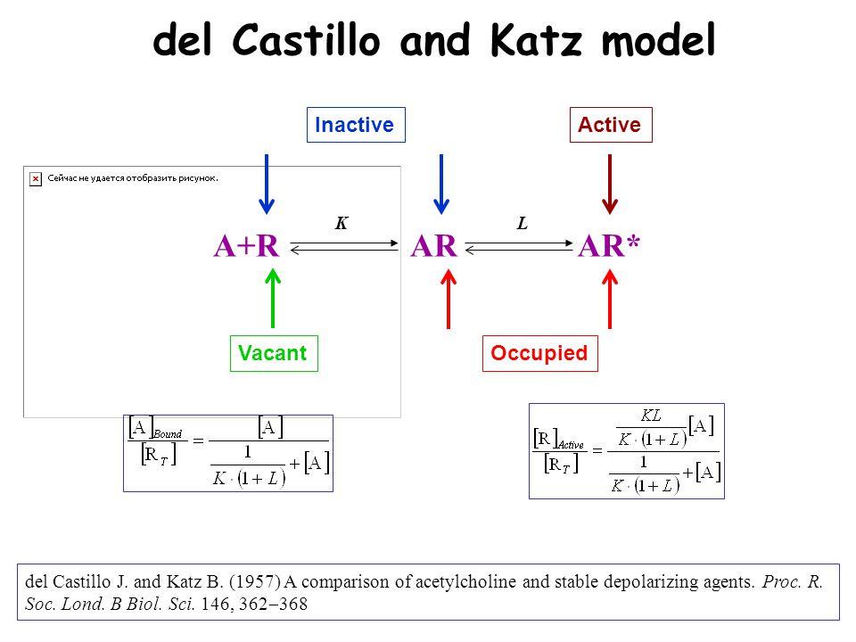 del Castillo and Katz model A+RARAR* VacantOccupied ActiveInactive KK LL del Castillo J.