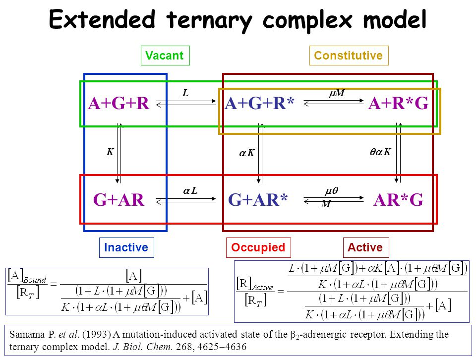 A+G+R G+AR A+G+R* G+AR* Extended ternary complex model Inactive Active Vacant Occupied Constitutive A+R*G AR*G K   K  K LL MM   L   M