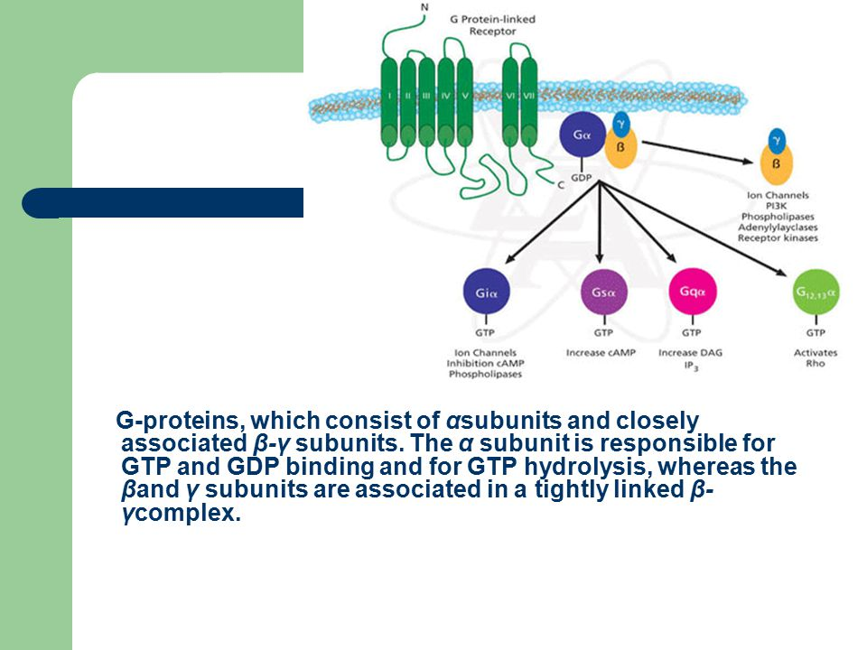 G-proteins, which consist of αsubunits and closely associated β-γ subunits.