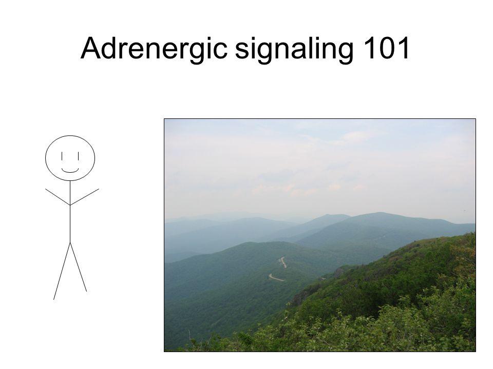 Adrenergic signaling 101