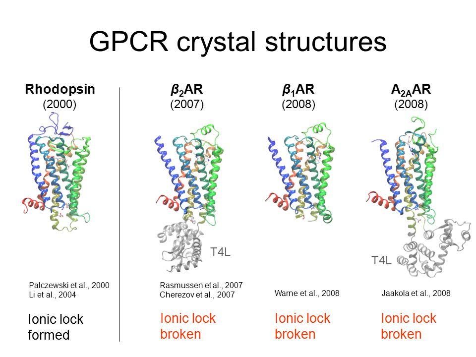 GPCR crystal structures Rhodopsin (2000) β 1 AR (2008) A 2A AR (2008) β 2 AR (2007) Ionic lock formed Ionic lock broken Ionic lock broken Ionic lock broken T4L Rasmussen et al., 2007 Cherezov et al., 2007 Palczewski et al., 2000 Li et al., 2004 Jaakola et al., 2008Warne et al., 2008