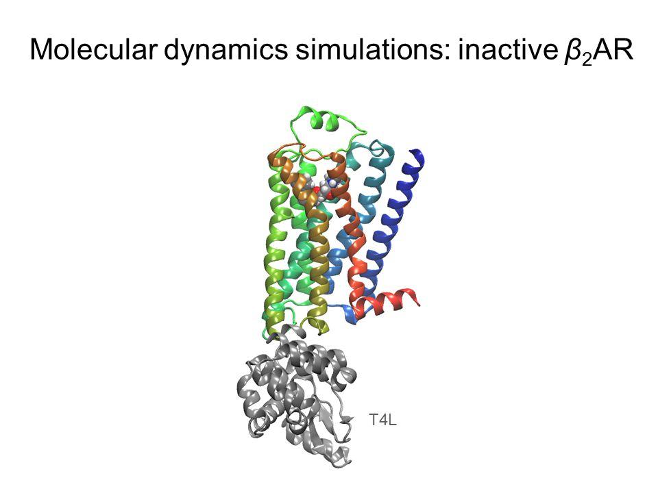 Molecular dynamics simulations: inactive β 2 AR T4L