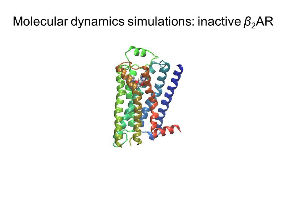 Molecular dynamics simulations: inactive β 2 AR