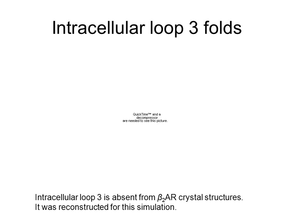 Intracellular loop 3 folds Intracellular loop 3 is absent from β 2 AR crystal structures.
