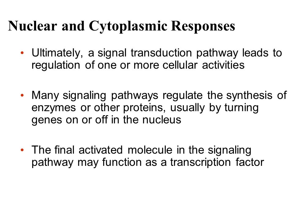 Nuclear and Cytoplasmic Responses Ultimately, a signal transduction pathway leads to regulation of one or more cellular activities Many signaling pathways regulate the synthesis of enzymes or other proteins, usually by turning genes on or off in the nucleus The final activated molecule in the signaling pathway may function as a transcription factor