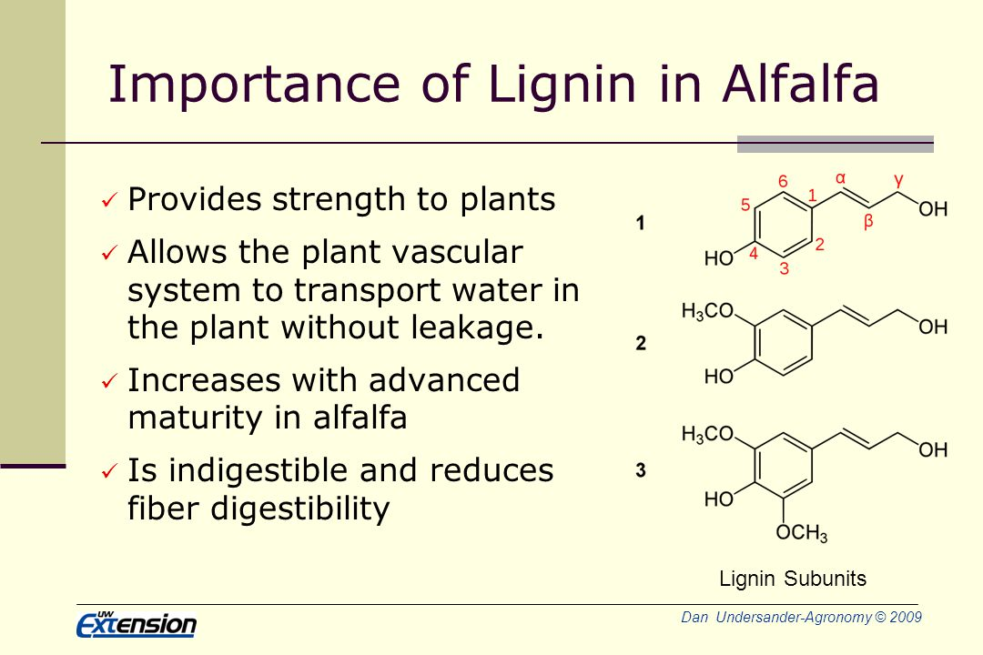 Dan Undersander-Agronomy © 2009 Importance of Lignin in Alfalfa Provides strength to plants Allows the plant vascular system to transport water in the plant without leakage.