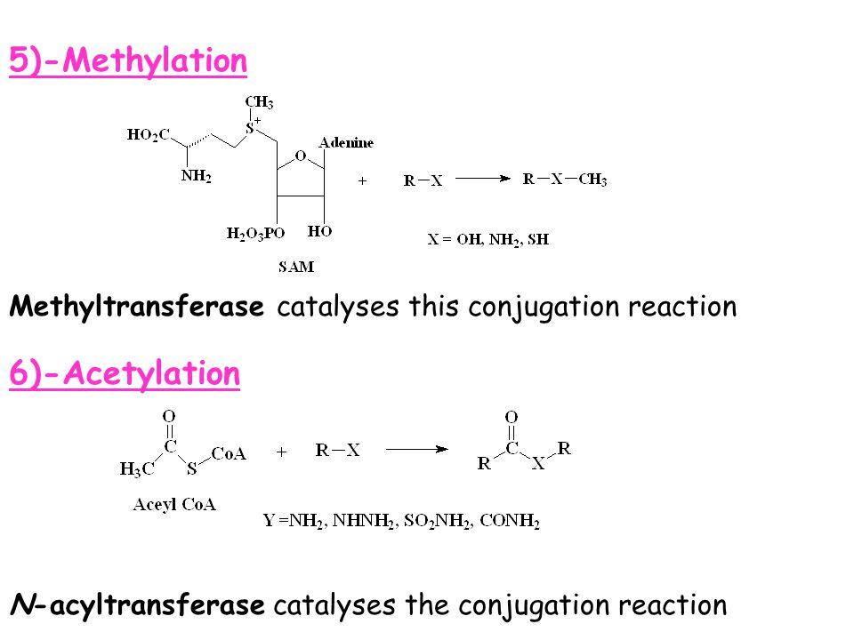 5)-Methylation 6)-Acetylation N-acyltransferase catalyses the conjugation reaction Methyltransferase catalyses this conjugation reaction