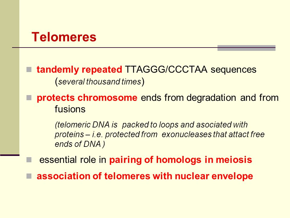 Telomeres tandemly repeated TTAGGG/CCCTAA sequences ( several thousand times ) protects chromosome ends from degradation and from fusions (telomeric D