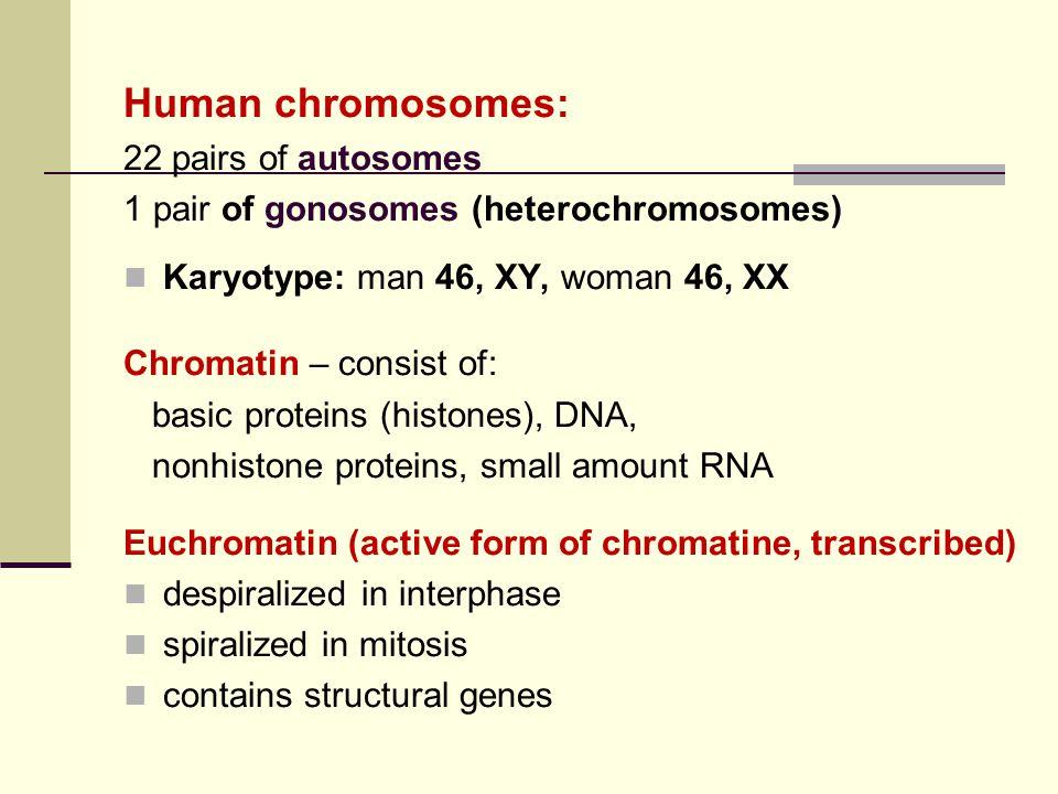 Human chromosomes: 22 pairs of autosomes 1 pair of gonosomes (heterochromosomes) Karyotype: man 46, XY, woman 46, XX Chromatin – consist of: basic pro