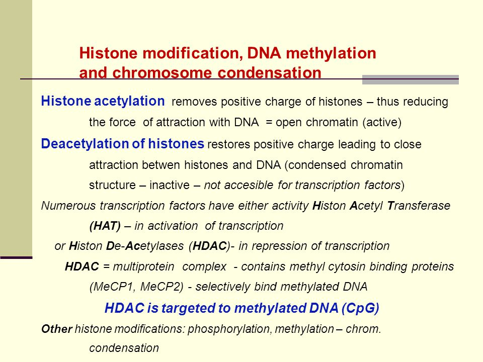 Histone acetylation removes positive charge of histones – thus reducing the force of attraction with DNA = open chromatin (active) Deacetylation of hi