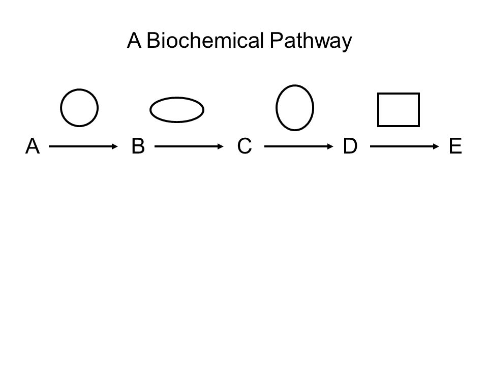 ABCDE A Biochemical Pathway