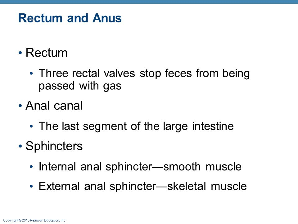Copyright © 2010 Pearson Education, Inc. Rectum and Anus Rectum Three rectal valves stop feces from being passed with gas Anal canal The last segment