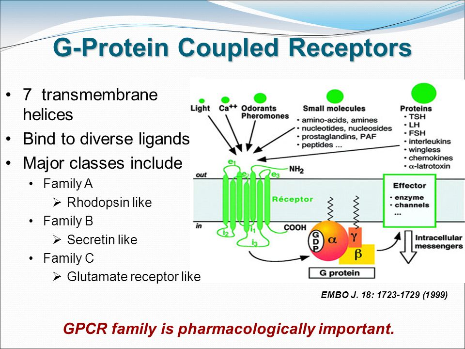 G-Protein Coupled Receptors EMBO J.