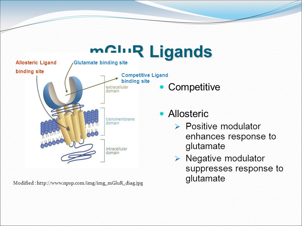 mGluR Ligands Modified : http://www.npsp.com/img/img_mGluR_diag.jpg Competitive Allosteric  Positive modulator enhances response to glutamate  Negative modulator suppresses response to glutamate Glutamate binding siteAllosteric Ligand binding site Competitive Ligand binding site