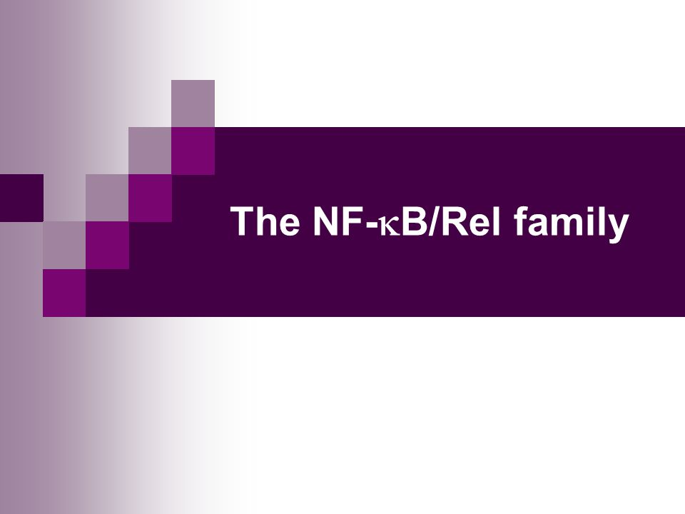 The NF-  B/Rel family
