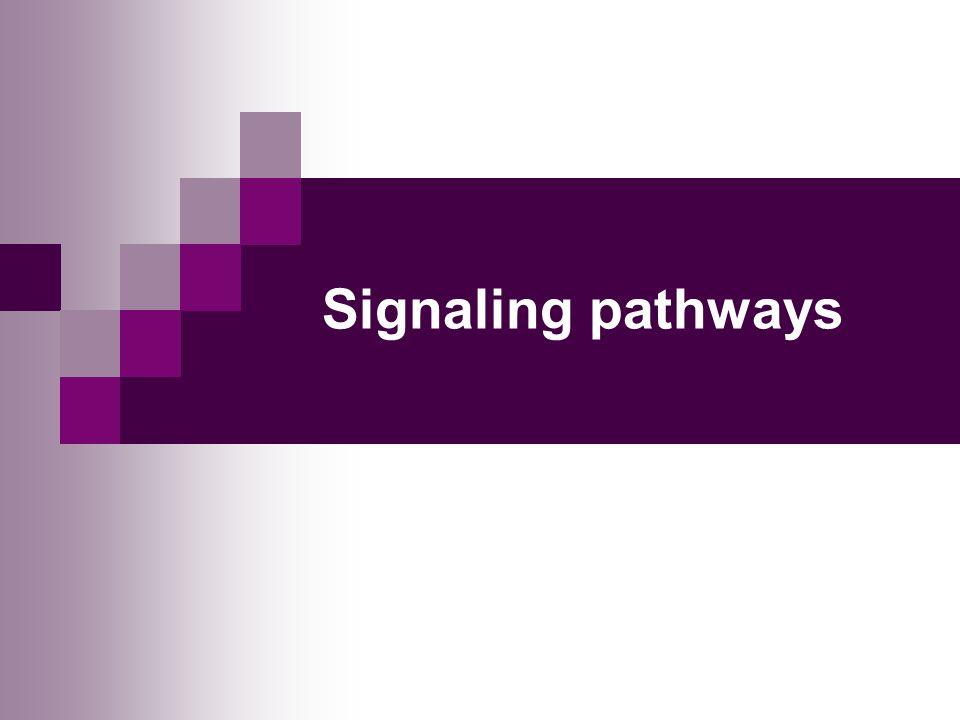 Signaling pathways