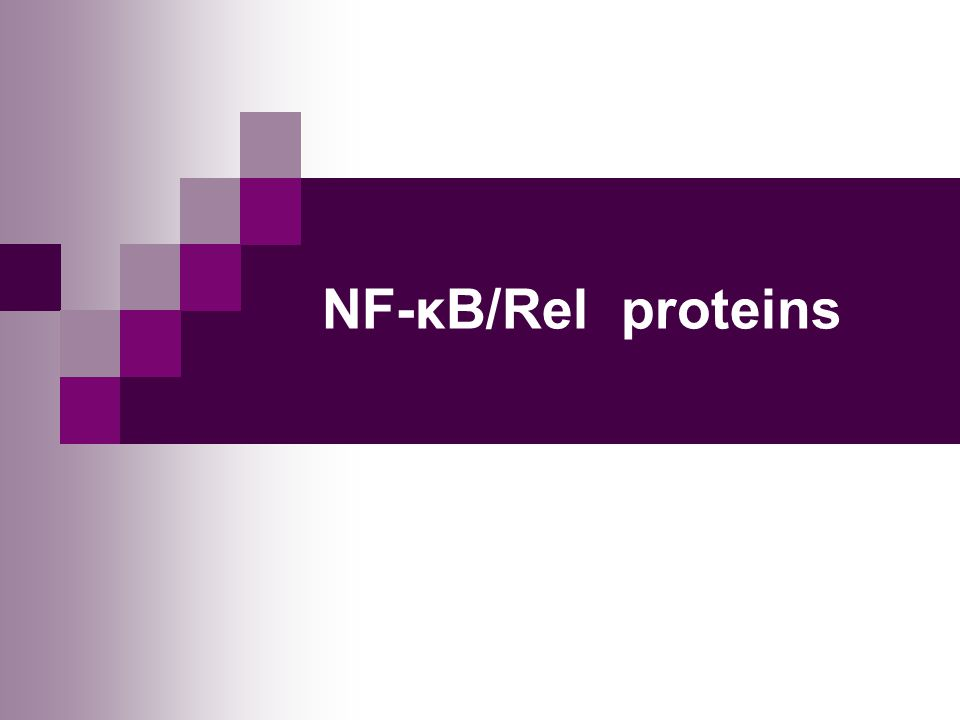 NF-κB/Rel proteins