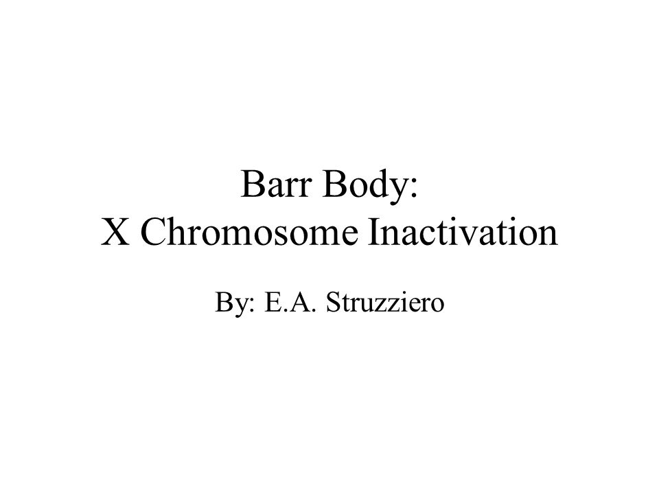Barr Body: X Chromosome Inactivation By: E.A. Struzziero