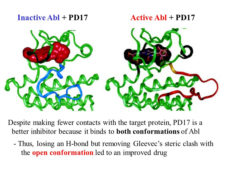 Inactive Abl + PD17Active Abl + PD17 Despite making fewer contacts with the target protein, PD17 is a better inhibitor because it binds to both conformations of Abl - Thus, losing an H-bond but removing Gleevec's steric clash with the open conformation led to an improved drug