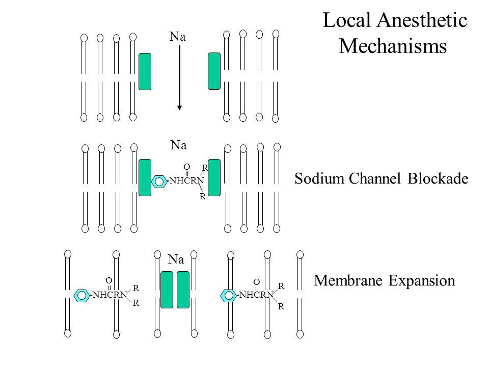 Na -NHCRN O R R Sodium Channel Blockade -NHCRN O R R O R R Membrane Expansion Na Local Anesthetic Mechanisms