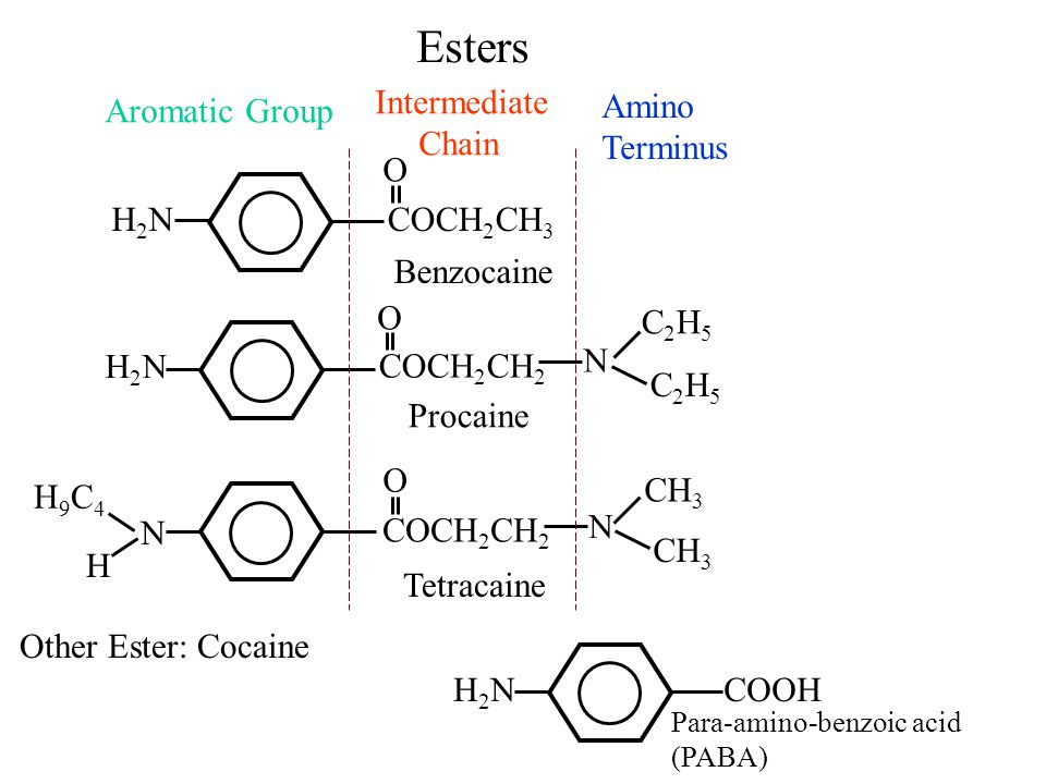 Esters N H2NH2N H2NH2NCOCH 2 CH 3 COCH 2 CH 2 O Benzocaine O N C2H5C2H5 C2H5C2H5 Procaine COCH 2 CH 2 N CH 3 O H H9C4H9C4 Tetracaine Aromatic Group In