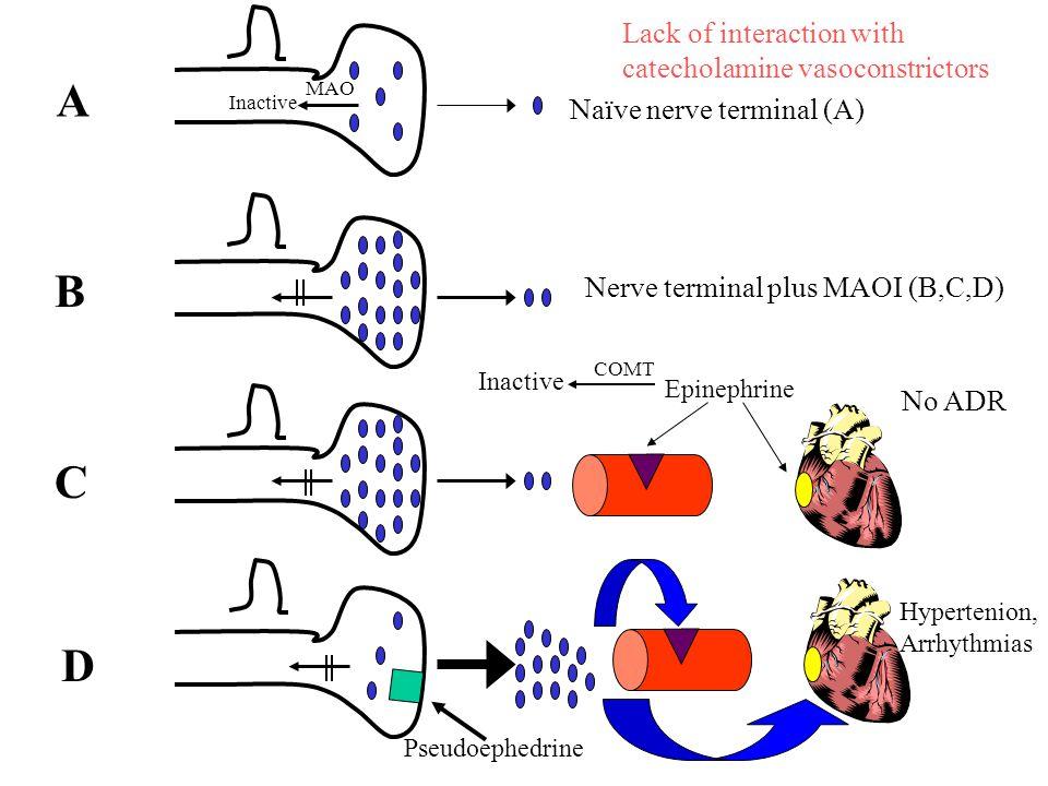 Epinephrine Pseudoephedrine A B C D Naïve nerve terminal (A) Nerve terminal plus MAOI (B,C,D) No ADR Hypertenion, Arrhythmias MAO Inactive Lack of interaction with catecholamine vasoconstrictors COMT Inactive