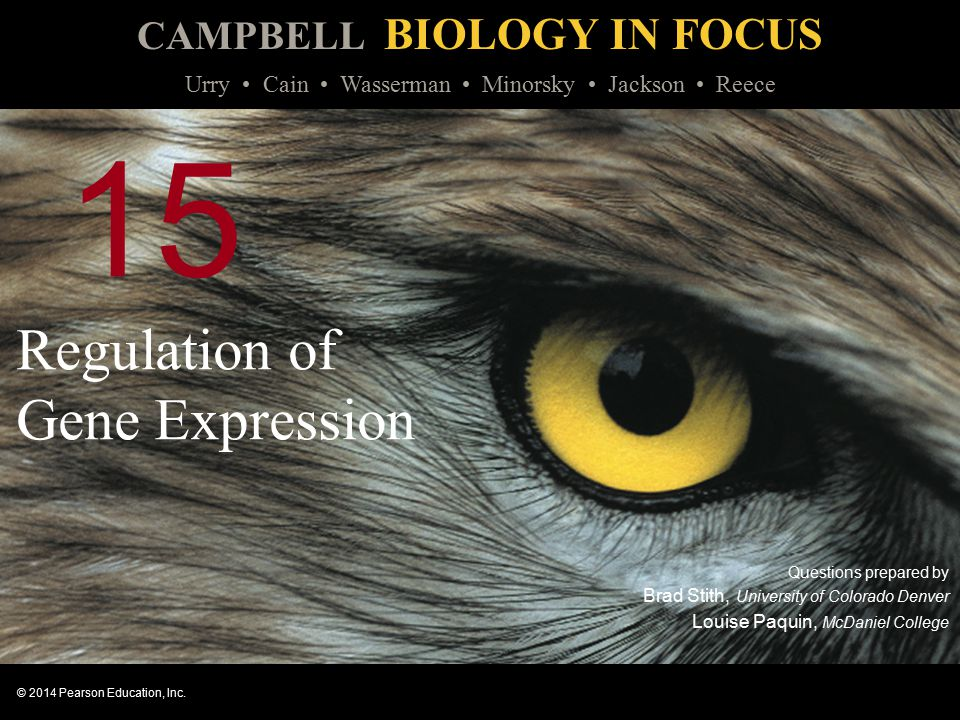 CAMPBELL BIOLOGY IN FOCUS © 2014 Pearson Education, Inc. Urry Cain Wasserman Minorsky Jackson Reece 15 Regulation of Gene Expression Questions prepare