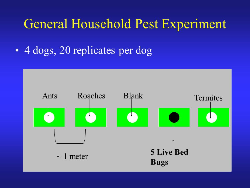 General Household Pest Experiment 4 dogs, 20 replicates per dog AntsRoaches 5 Live Bed Bugs Blank Termites ~ 1 meter