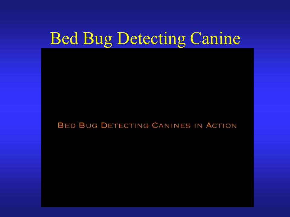 Bed Bug Detecting Canine
