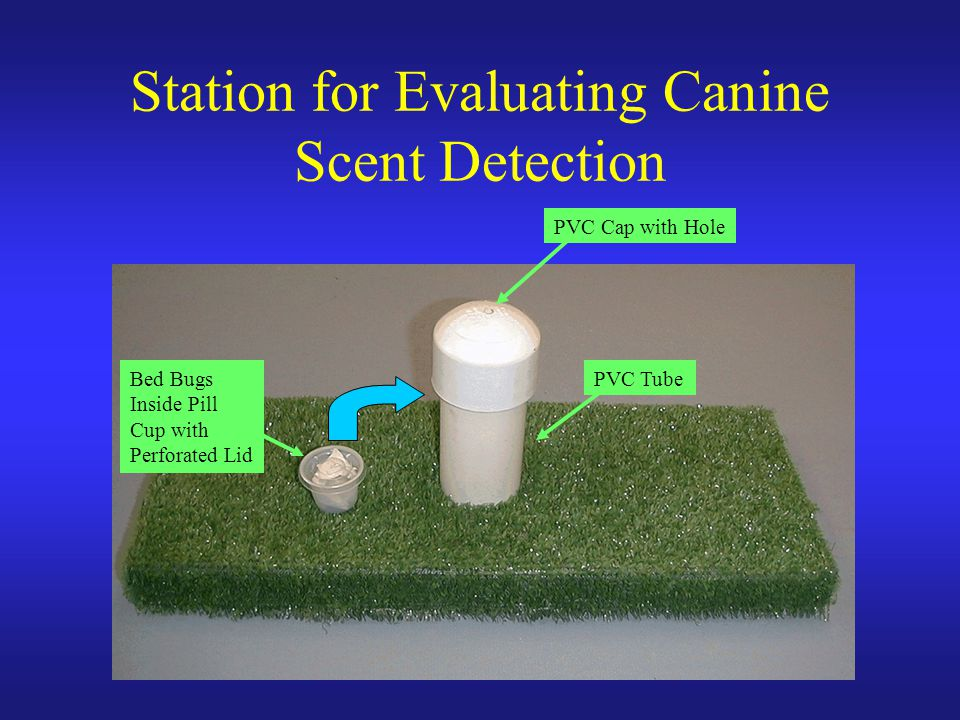 Station for Evaluating Canine Scent Detection PVC Tube PVC Cap with Hole Bed Bugs Inside Pill Cup with Perforated Lid