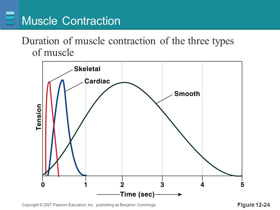 Copyright © 2007 Pearson Education, Inc., publishing as Benjamin Cummings Figure 12-24 Muscle Contraction Duration of muscle contraction of the three types of muscle