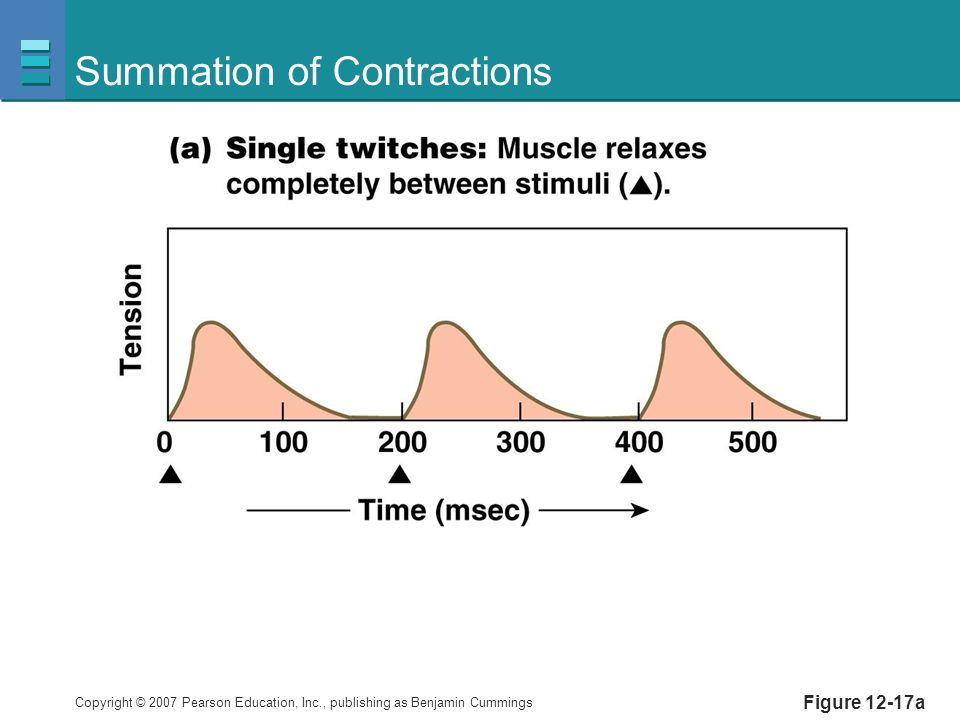 Copyright © 2007 Pearson Education, Inc., publishing as Benjamin Cummings Summation of Contractions Figure 12-17a