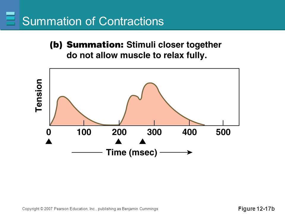 Copyright © 2007 Pearson Education, Inc., publishing as Benjamin Cummings Summation of Contractions Figure 12-17b