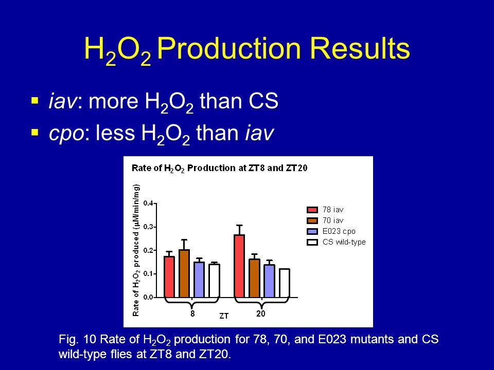 H 2 O 2 Production Results  iav: more H 2 O 2 than CS  cpo: less H 2 O 2 than iav Fig.