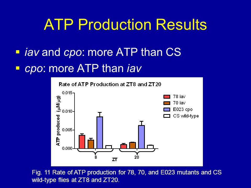 ATP Production Results  iav and cpo: more ATP than CS  cpo: more ATP than iav Fig.