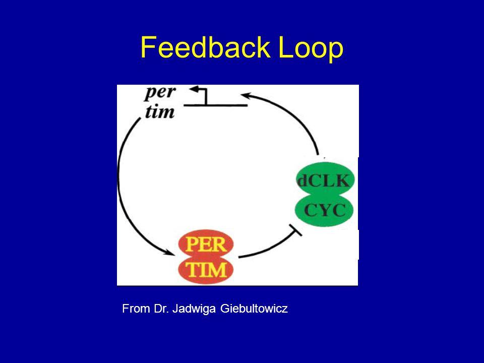 Feedback Loop From Dr. Jadwiga Giebultowicz