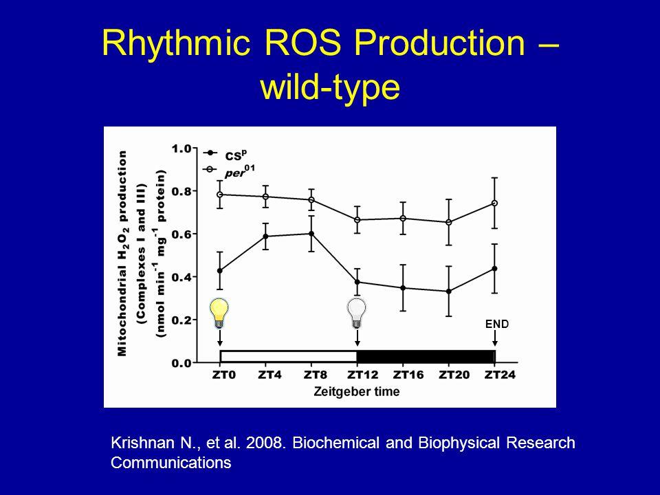 Rhythmic ROS Production – wild-type Krishnan N., et al.