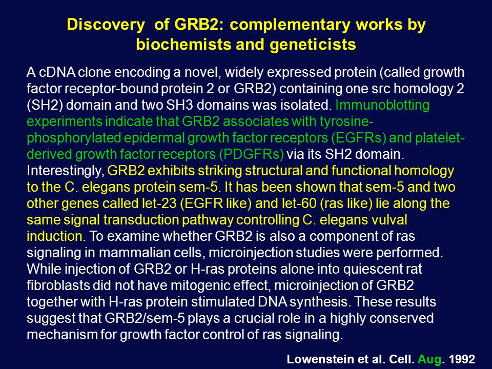 Discovery of GRB2: complementary works by biochemists and geneticists A cDNA clone encoding a novel, widely expressed protein (called growth factor receptor-bound protein 2 or GRB2) containing one src homology 2 (SH2) domain and two SH3 domains was isolated.