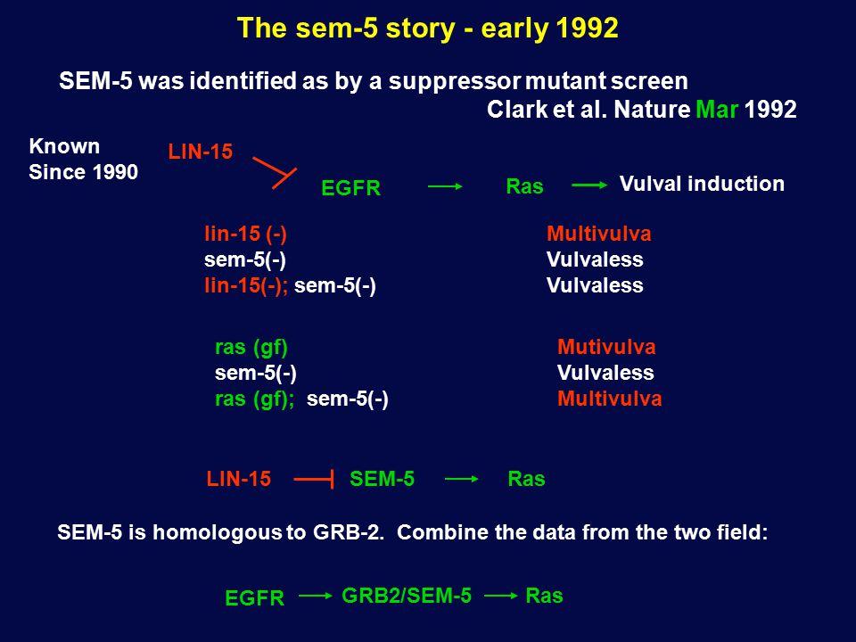 The sem-5 story - early 1992 SEM-5 was identified as by a suppressor mutant screen Clark et al.