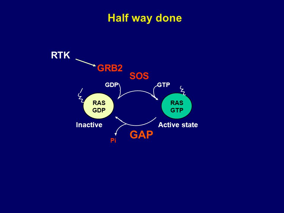 Half way done RAS GDP RAS GTP Pi GTPGDP GAP Active stateInactive RTK SOS GRB2