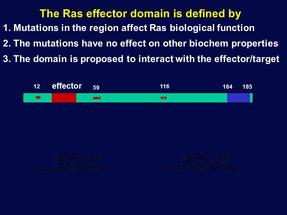 The Ras effector domain is defined by 1. Mutations in the region affect Ras biological function 2. The mutations have no effect on other biochem prope