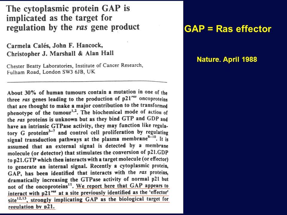 GAP = Ras effector Nature. April 1988