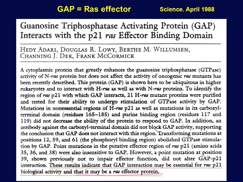 GAP = Ras effector Science. April 1988