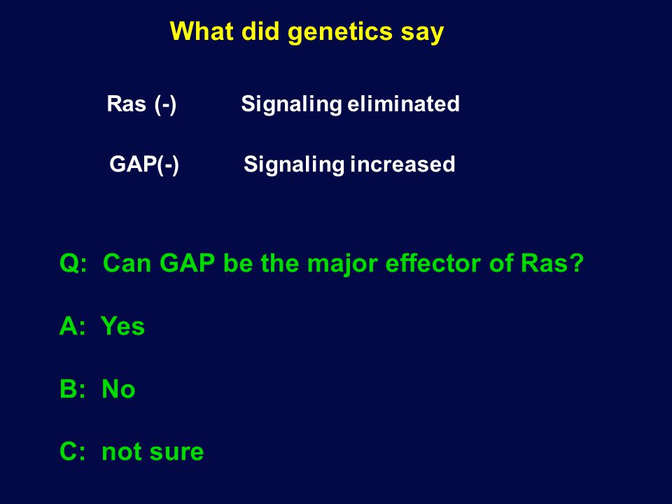 What did genetics say Ras (-) Signaling eliminated GAP(-) Signaling increased Q: Can GAP be the major effector of Ras? A: Yes B: No C: not sure