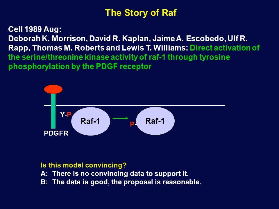 The Story of Raf Cell 1989 Aug: Deborah K. Morrison, David R.
