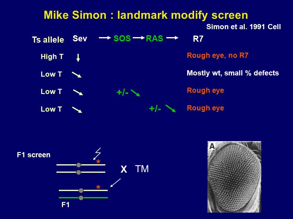 Mike Simon : landmark modify screen Simon et al. 1991 Cell SevRAS SOS R7 Rough eye, no R7 Mostly wt, small % defects Rough eye High T Low T Ts allele