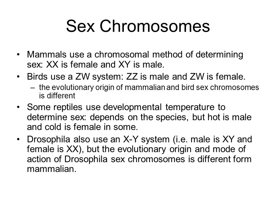 Sex Chromosomes Mammals use a chromosomal method of determining sex: XX is female and XY is male. Birds use a ZW system: ZZ is male and ZW is female.